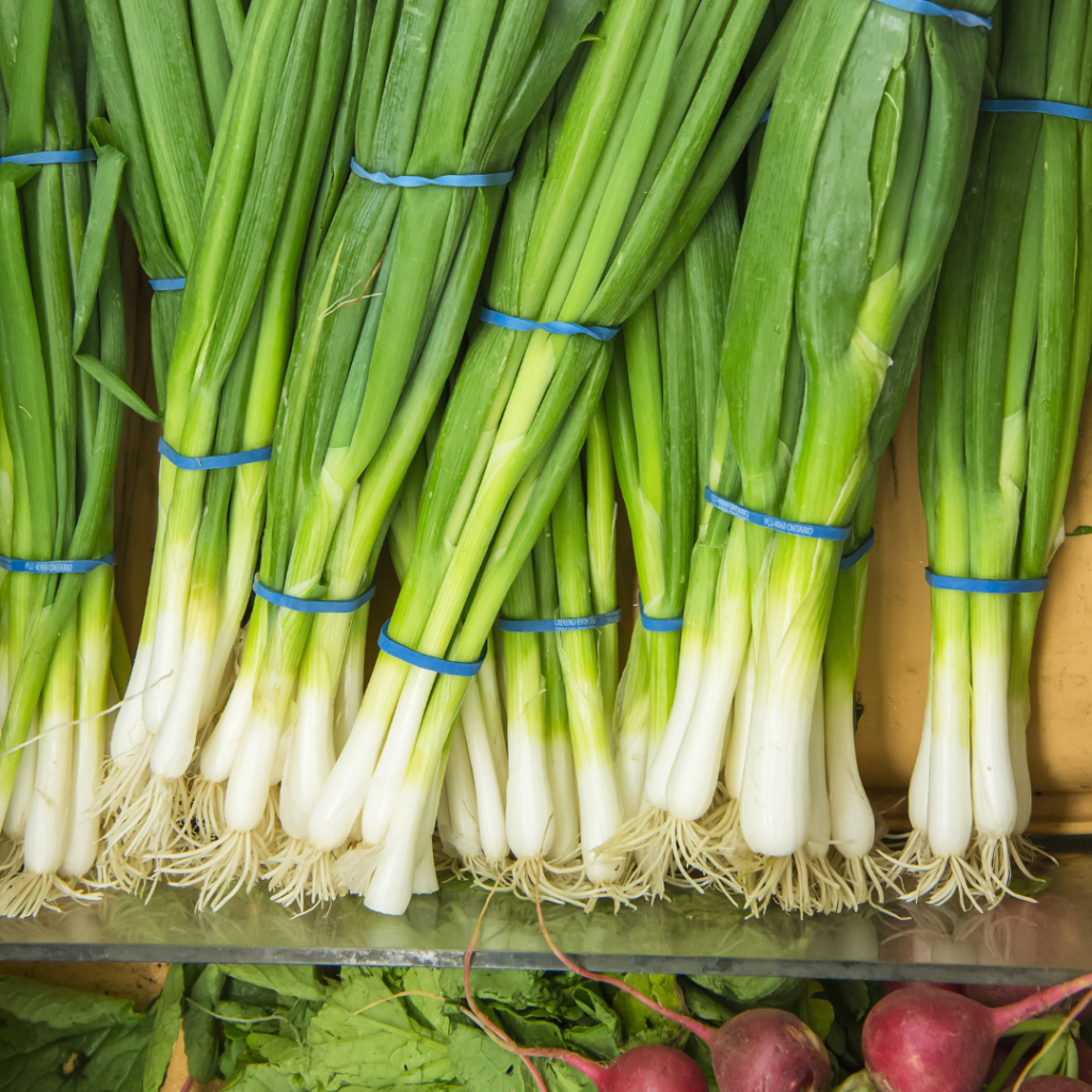 how to grow green onions